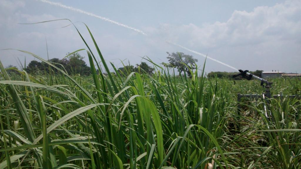 irrigating sugarcane with water-reels for best in sugarcane irrigation